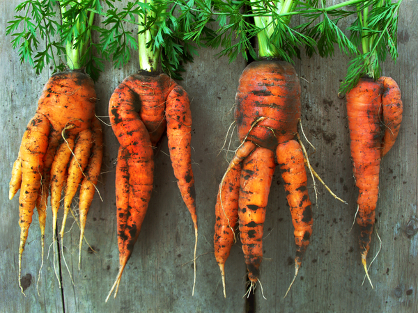 eat ugly carrots and their tops to reduce food waste environmental impact