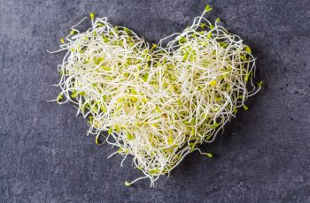 Alfalfa seed sprouts, healthy diet superfood and clean eating concept, heart shaped seed sprouts top view