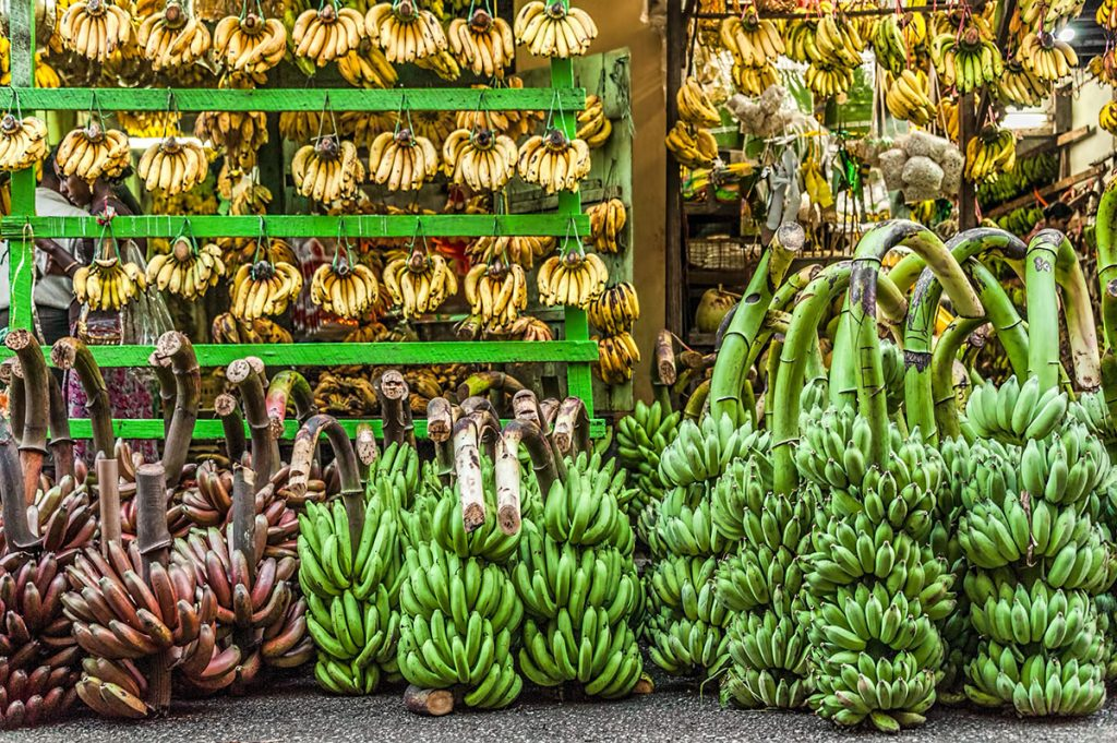 Are Bananas and Plantains Good for You?